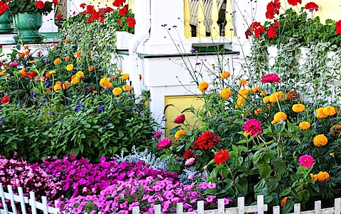 MackinacFlowers